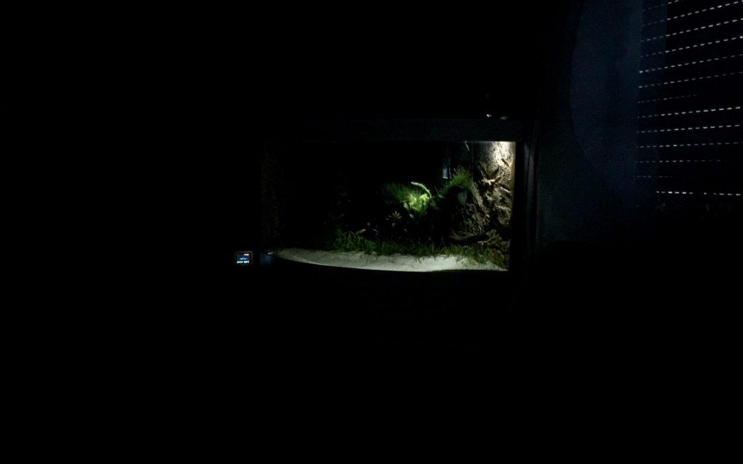 Nachts für Atmosphäre sorgen. Das Mondlicht, ein muss für jeden Nachtaktiven.