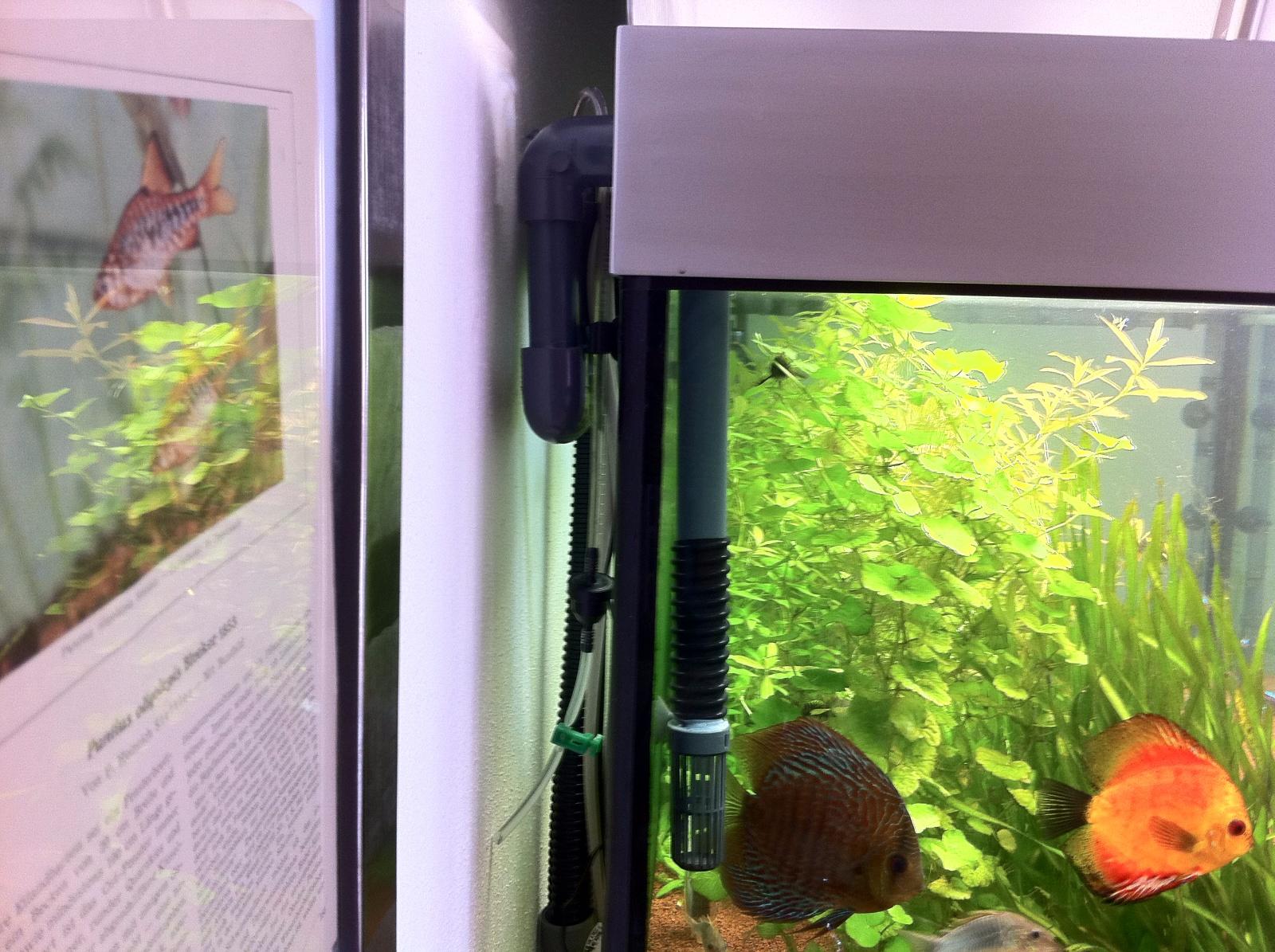 Bauanleitung Aquariumuberlauf Ohne Bohrung Abenteuer Aquarium De