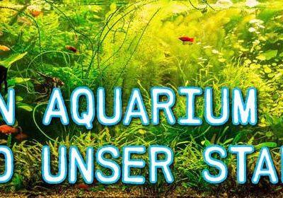 Dein Aquarium im Aquaristik Fachmagazin