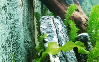 Meine Erfahrung mit der Back to Nature Amazonas SlimLine Rückwand